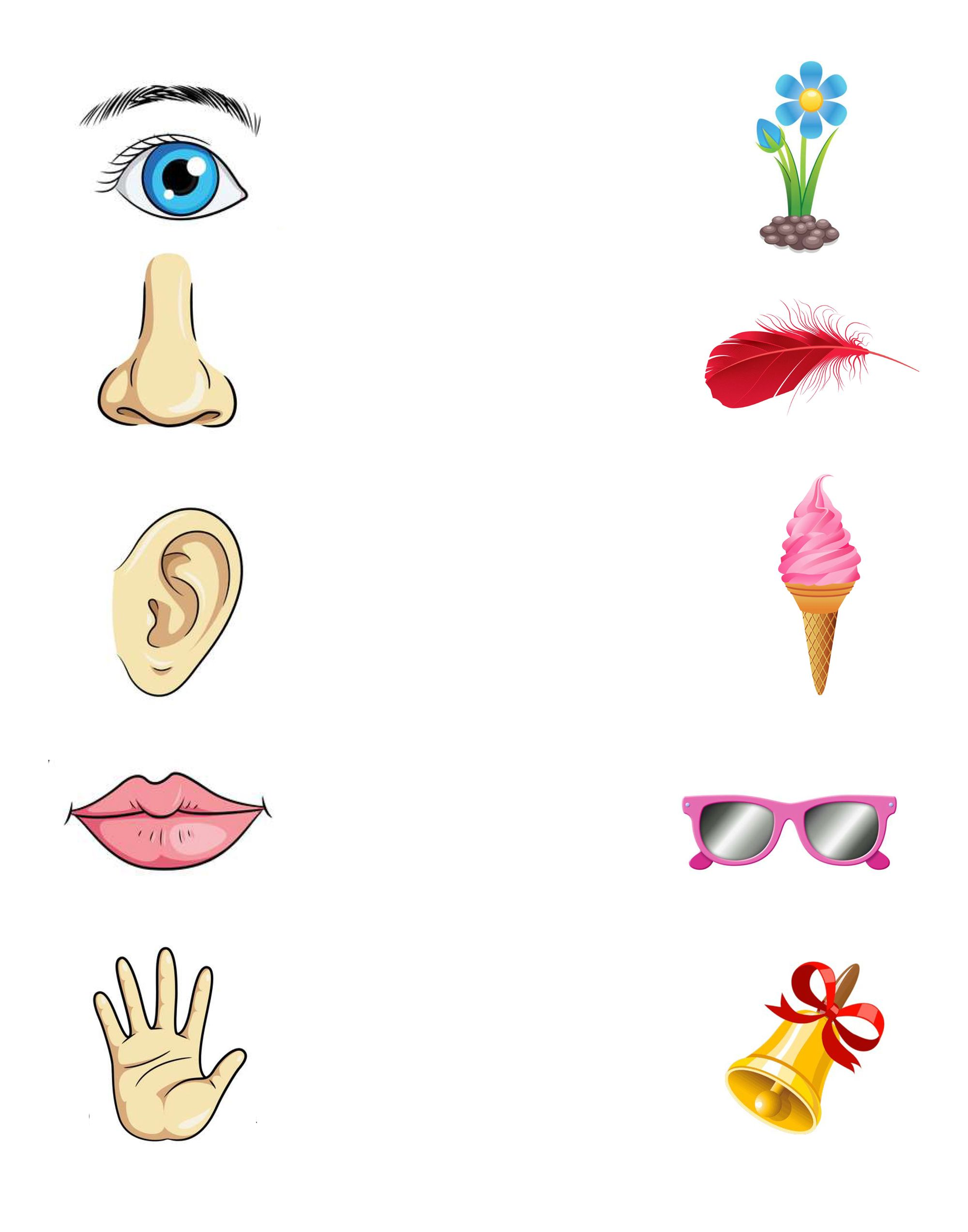 Части тела человека в картинках нос